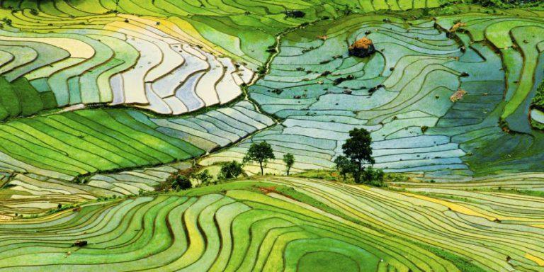 Os encantos naturais de uma terra onde (quase) tudo é verde